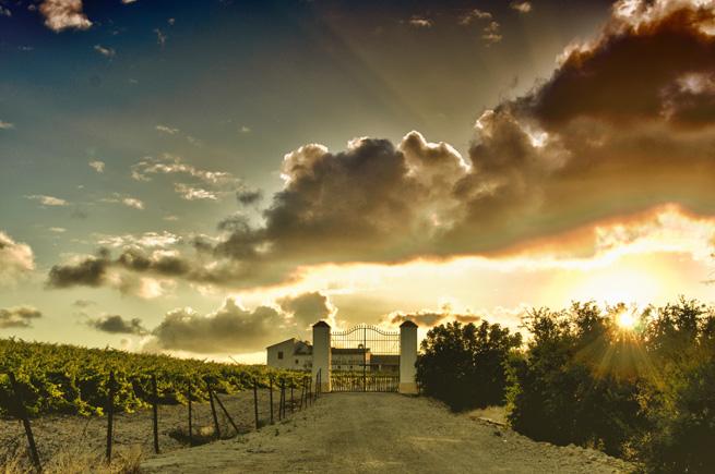 finca- vignoble de la route du Marco de Jerez