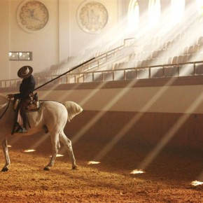Le ballet des chevaux de Jerez