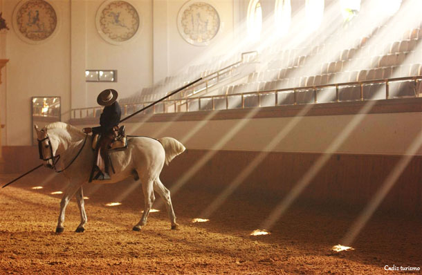 cheval-ecole-royal-art-equestre-jerez-frontera-andalousie